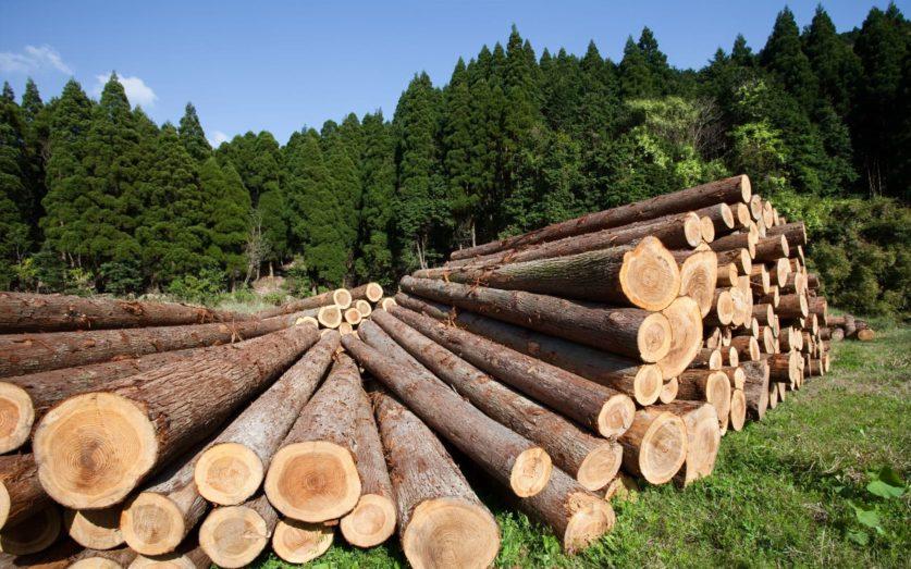 Проблемы вывоза лесоматериалов на экспорт в Хабаровске