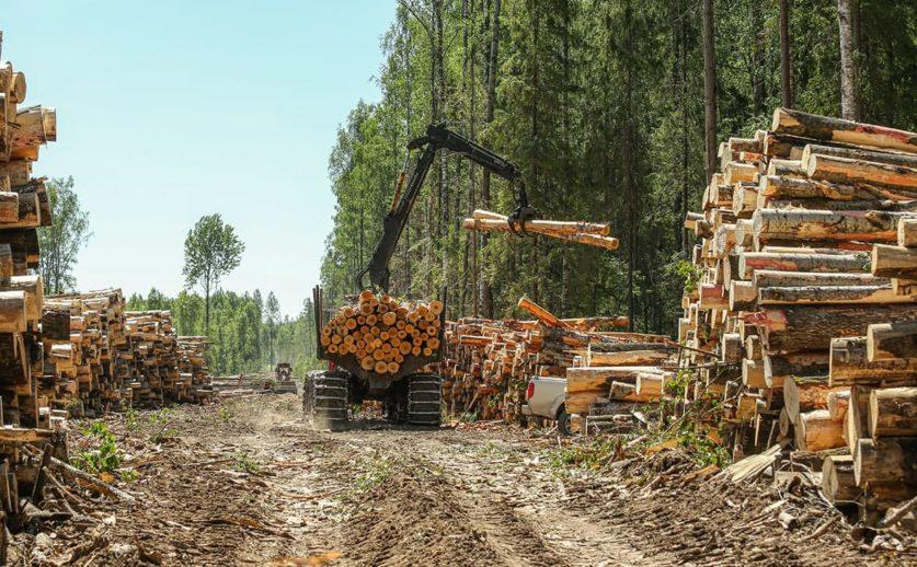 РФПИ займется экспортом леса с Дальнего Востока
