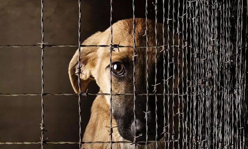 административное наказание за жестокое обращение с животными