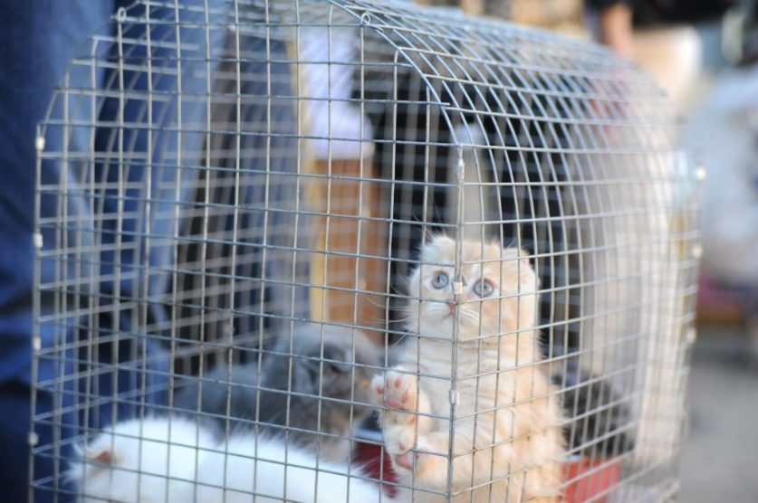 Госдума рассмотрит запрет торговли животными в неподобающих условиях